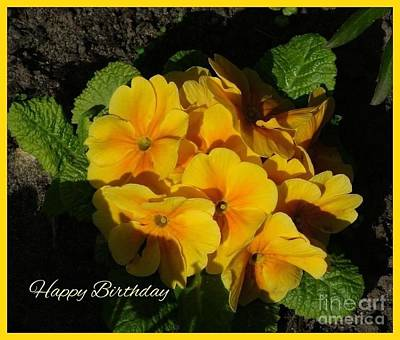 Photograph - Happy Birthday Primrose by Joan-Violet Stretch