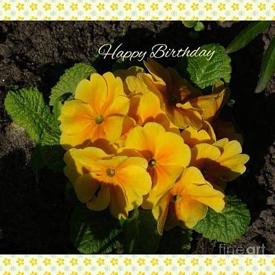 Photograph - Happy Birthday Primrose 2  by Joan-Violet Stretch