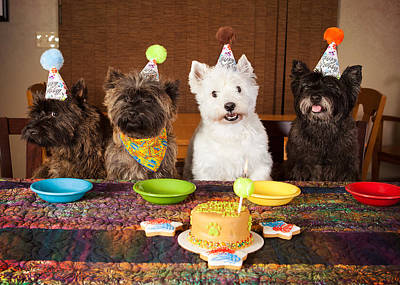 Photograph - Happy Birthday Terriers by Heidi Marcinik