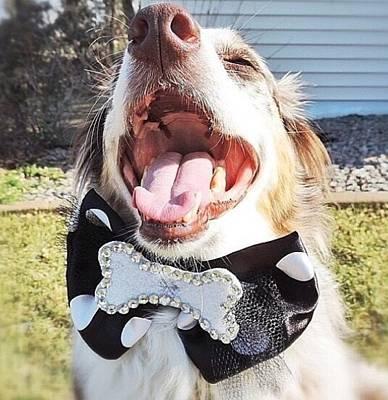 Photograph - Happy Bone Tie by Oasis Tone