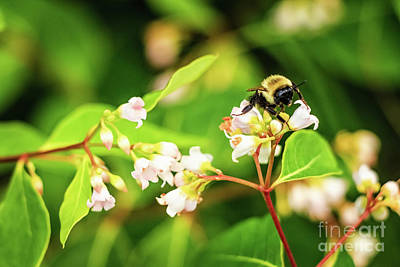Photograph - Happy Bumblebee by Elizabeth Dow