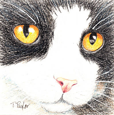 Drawing - Happy Cat With The Golden Eyes by Terry Taylor