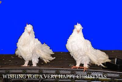 Photograph - Happy Christmas-3 by Anand Swaroop Manchiraju