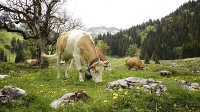 Happy Cows In High Pastures Art Print