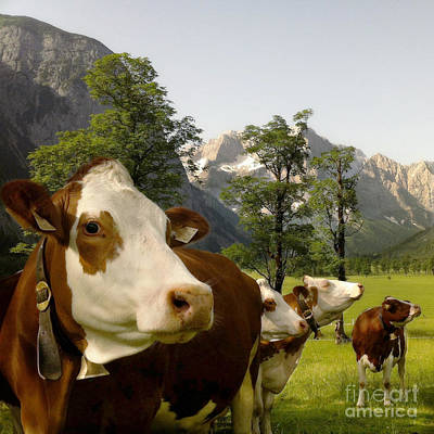 Er Photograph - Happy Cows by Mariko Klug