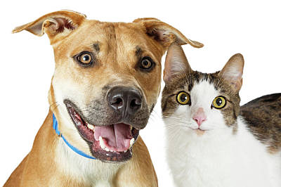 Photograph - Happy Crossbreed Cat And Dog Together by Susan Schmitz