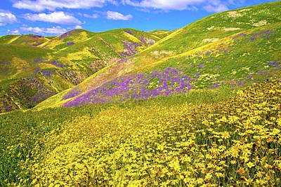 Photograph - Happy Days Are Here Again - Superbloom 2017 by Lynn Bauer
