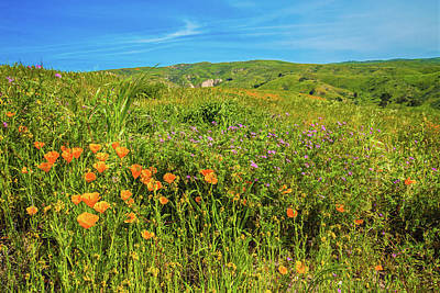 Photograph - Happy Days In The Hills by Lynn Bauer