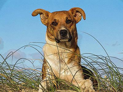 Happy Dog At The Beach Art Print