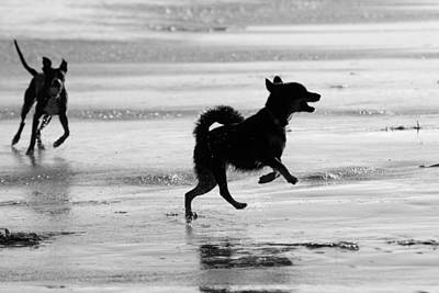 Photograph - Happy Dog Black And White by Jill Reger