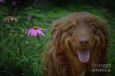 Photograph - Happy Dog Days by Kim Henderson