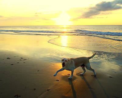 Photograph - Happy Dog Sunrise 10 72416 by Mark Lemmon