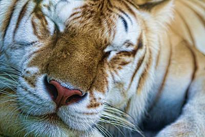 Animal Paintings David Stribbling - Happy Dreams by Jennifer Luzio