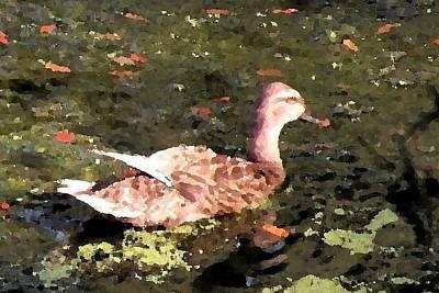 Photograph - Happy Duck by Kim Bemis