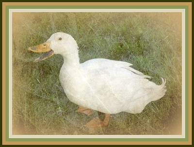Photograph - Happy Duck Portrait by Jodie Marie Anne Richardson Traugott          aka jm-ART