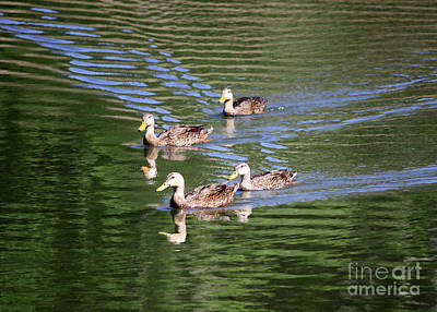 Photograph - Happy Ducks On The Pond by Carol Groenen