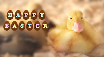 Photograph - Happy Easter Greetings From Cute Duckling by Shelley Neff