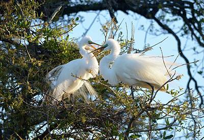 Photograph - Happy Egret Mates by Richard Bryce and Family