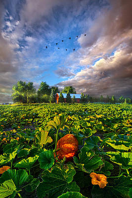 Photograph - Happy Endings by Phil Koch