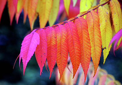 Photograph - Happy Fall by Silke Brubaker