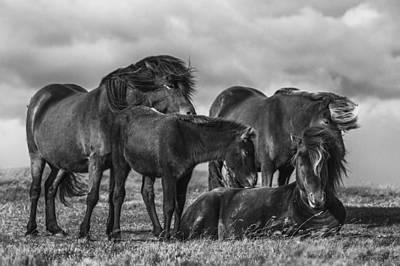 Iceland Photograph - Happy Family by Bragi Ingibergsson -
