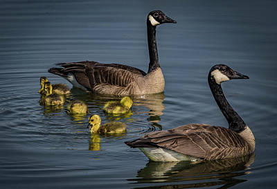 Photograph - Happy Family by Ray Congrove