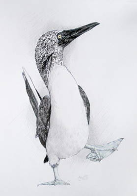 Boobies Drawing - Happy Feet by Barbara Keith