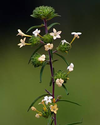 Photograph - Happy Flowers by Ben Upham III