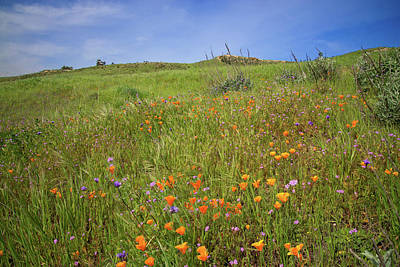 Photograph - Happy Flowers Of The 2017 Superbloom  by Lynn Bauer
