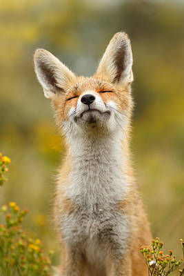 Romantic Photograph - Happy Fox by Roeselien Raimond