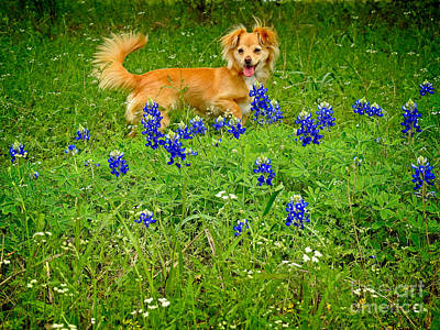 Photograph - Happy Friend On Blue Bonnet Trails by Ella Kaye Dickey