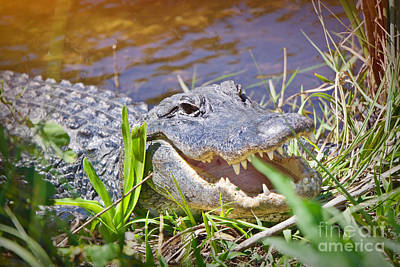 Photograph - Happy Gator 2 by Judy Kay
