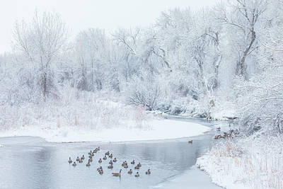 Winter Landscapes Photograph - Happy Geese by Darren White