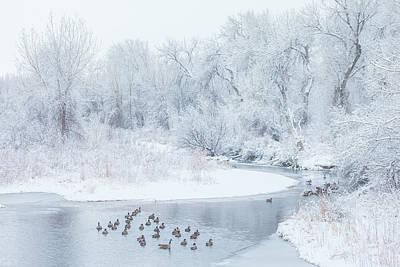 Snowy Scene Wall Art - Photograph - Happy Geese by Darren White