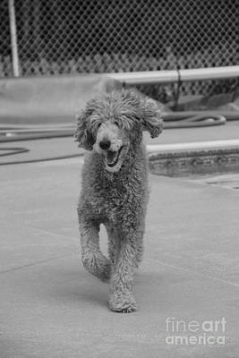 Photograph - Happy Go Pete by Jennifer E Doll