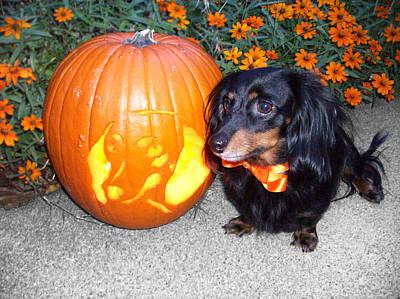 Dauschund Photograph - Happy Halloweenie by Melissa Chambers