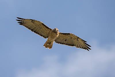 Photograph - Happy Hawk by Loree Johnson