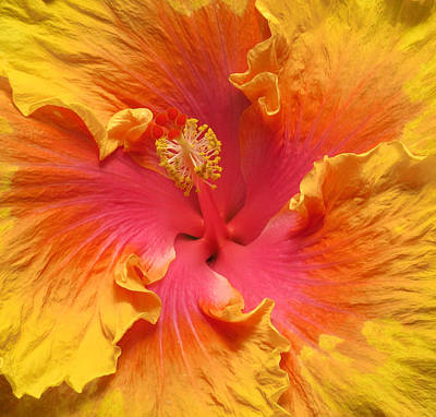 Photograph - Happy Hibiscus by MTBobbins Photography