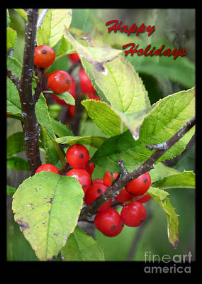 Photograph - Happy Holidays Red Berries by Dawn Gari