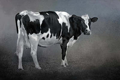 Photograph - Happy Holstein by HH Photography of Florida
