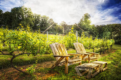 Blue Grapes Photograph - Happy Hour At The Vineyard by Debra and Dave Vanderlaan