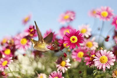 Happy Hummingbird Art Print