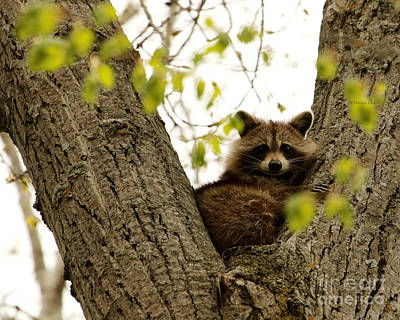 Photograph - Happy In Her Hideout by Heather King