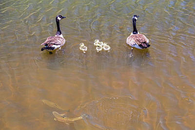Nature Photograph - Happy Lake Family by James BO Insogna