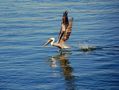 Happy Landing Pelican Art Print