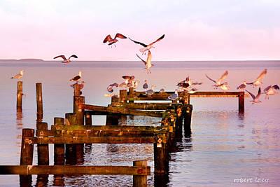 Scandanavia Photograph - Happy Landings by Robert Lacy