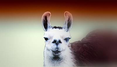 Photograph - Happy Llama by Myrna Migala