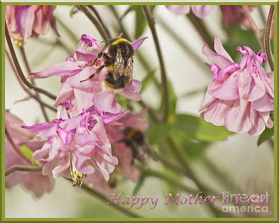Photograph - Happy Mother's Day Bee by Terri Waters
