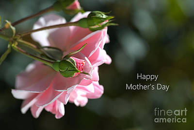 Photograph - Happy Mother's Day With Pink Rose by Joy Watson