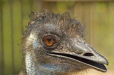 Ostrich Photograph - Happy Ostrich by Kenneth Albin